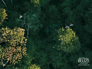 Heavenly Belize Macaws