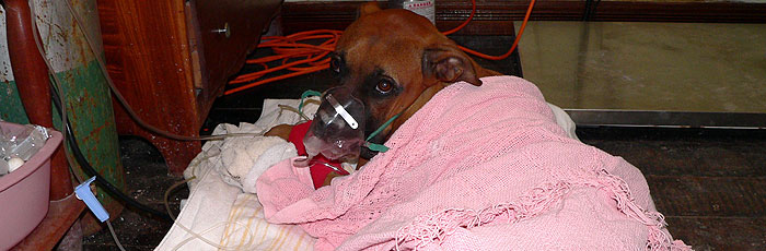 Saga Cares for a Need Dog