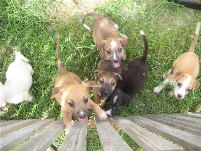 Saga puppies waiting to be adopted