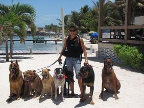 Kathy Walks Local Dogs