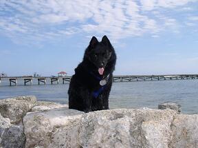 Tashi Enjoys a Walk on Ambergris Caye Beach