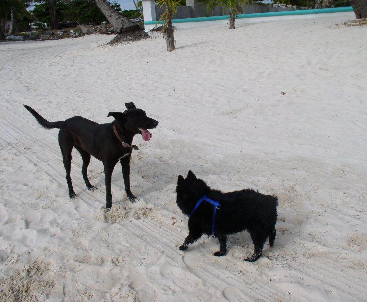 Tashi and Ziggy on a Beach Walk