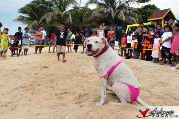 Saga Halloween Party Bikini Dog