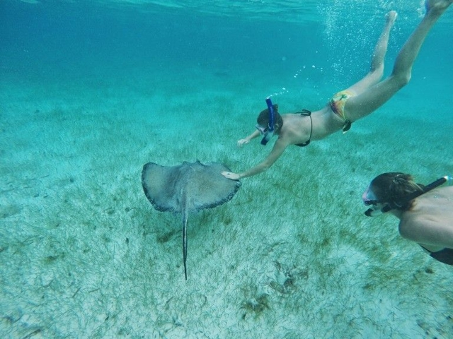 Swimming with Stingrays Photo Courtesy of Pinterest.com