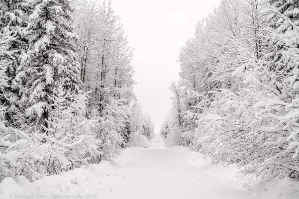 Canadian Winter Photo Courtesy of Narcity.com