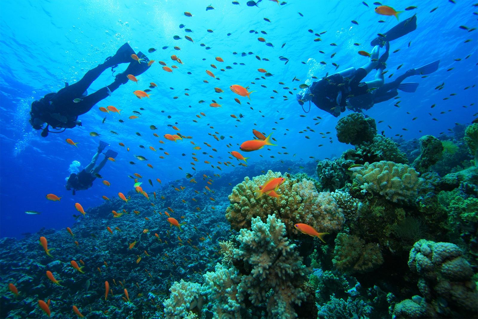 Ambergris Caye Diving