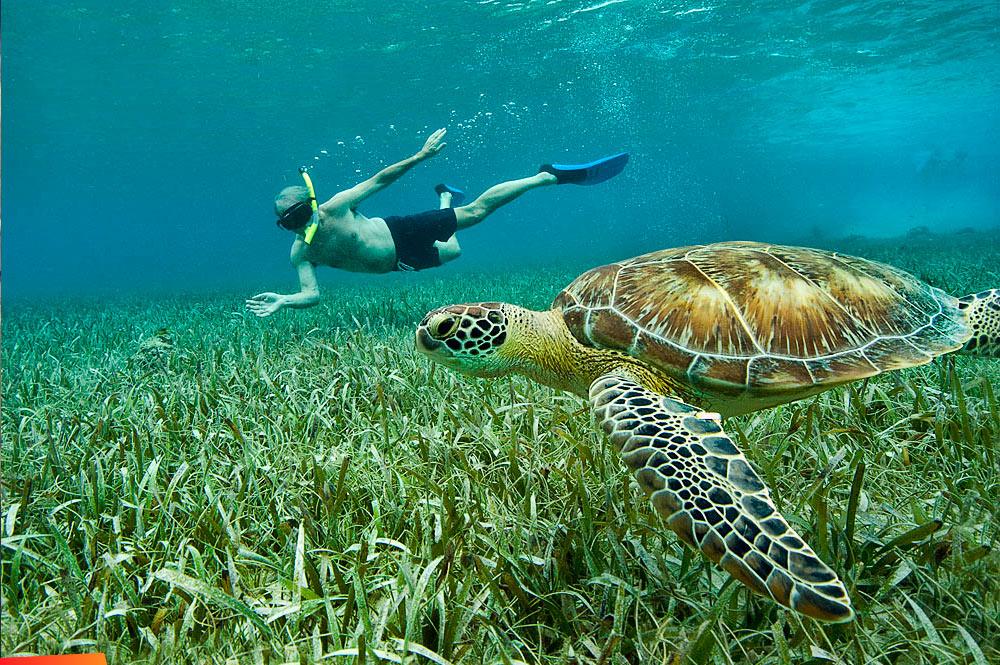 Hol-Chan-November-turtle-w-snorkeler-1000px.jpg