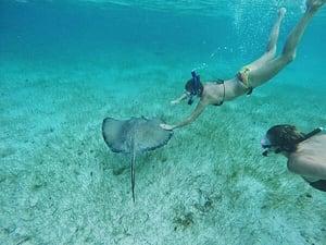 Swimming with Stingrays Photo Courtesy of Pinterest.com