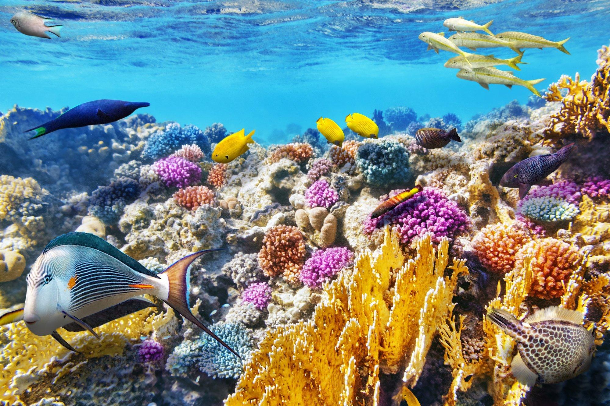 Marine Reserve, Ambergris Caye