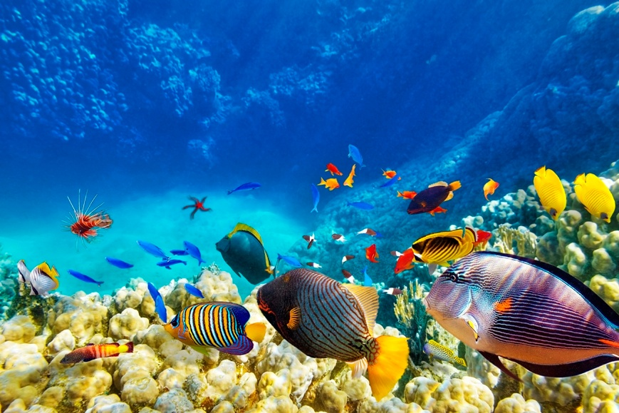 Underwater_in_the_Carribbean