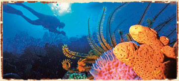 Things to Do on Ambergris Caye Belize