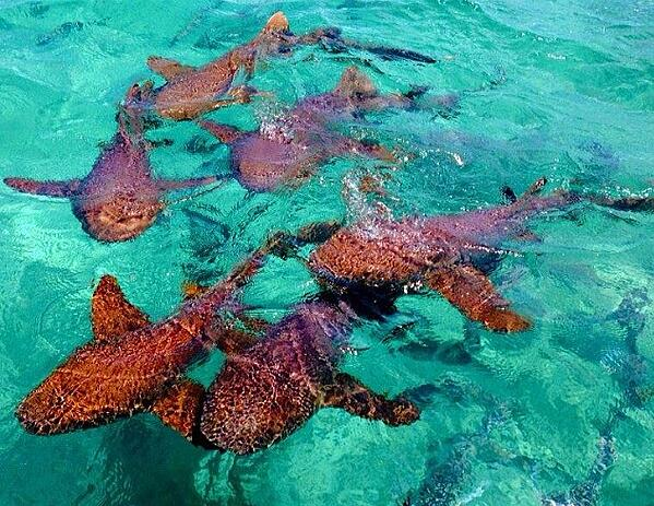 shark-ray-alley-belize