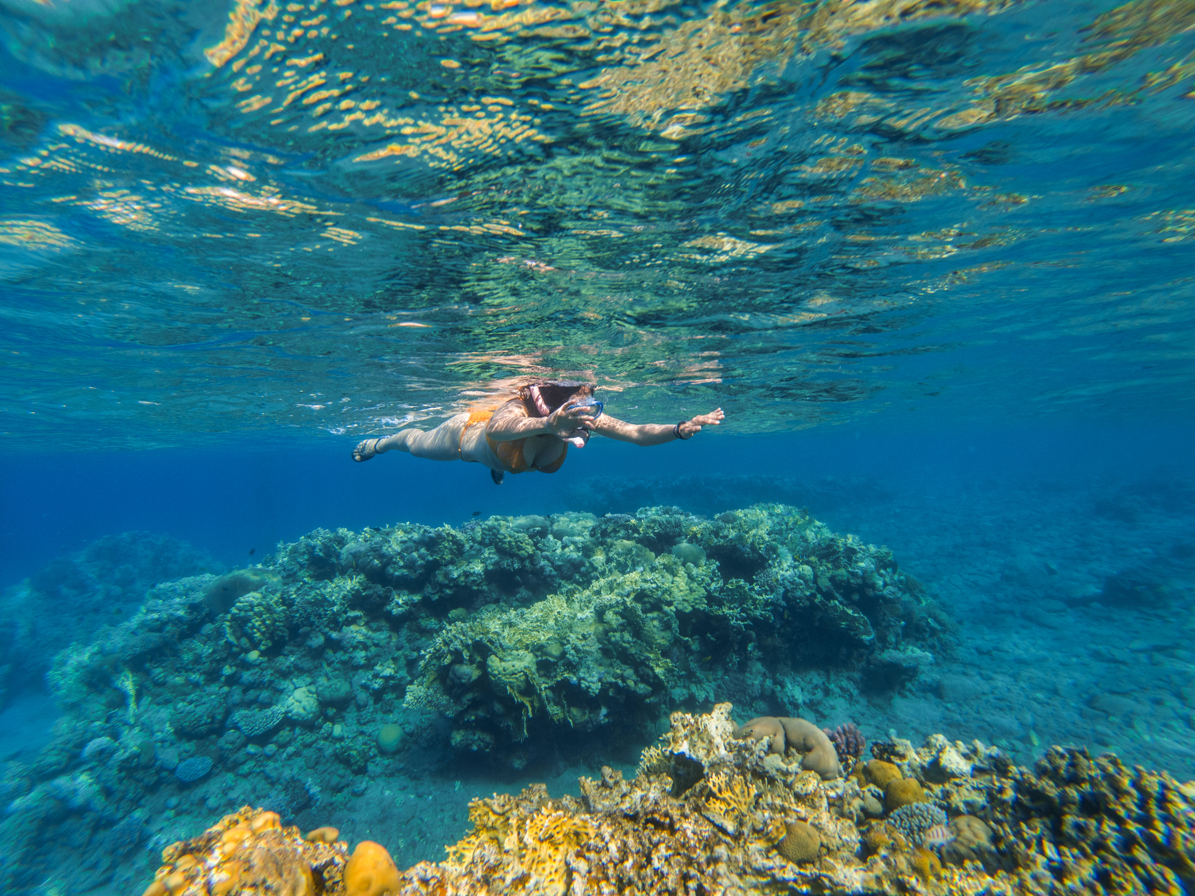 woman-snorkeling-underwater-above-coral-reef-GZYX2V4 copy