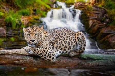 Jaguar_IS