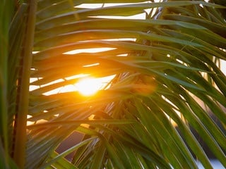 Sunshine thru palm
